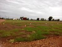 hurry up hurryy uppppppp...!!! N.A PLOT FOR SALE (urgent) EAST FACING Area: 1386sq.ft Rate:19.50 lack (N) address: nr. swami smartha temple, Besa manewada road, nagpur.